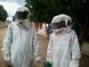 ataque_abelhas_02