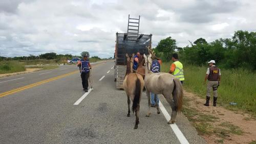 apreensao animais estradas conquista ba-263