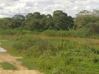 rio-gavio-condeuba (3)