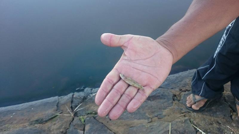 acude champrao condeuba margens mortes camaroes (1)